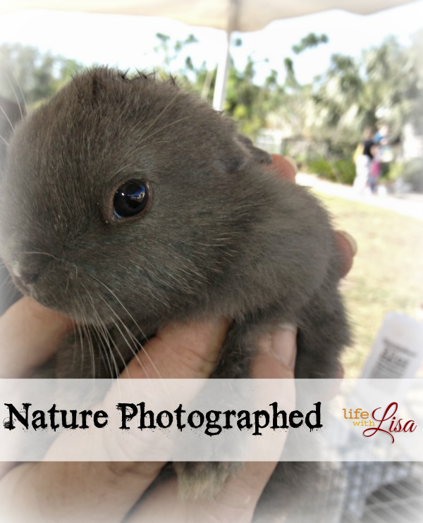 nature photographed rabbit