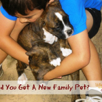 Should You Get a New Family Pet?