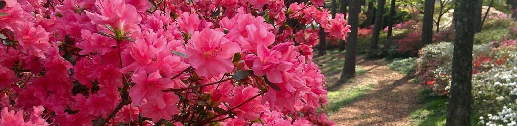 Spring_Banner
