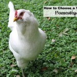 How to Choose a Vet for the Homesteader