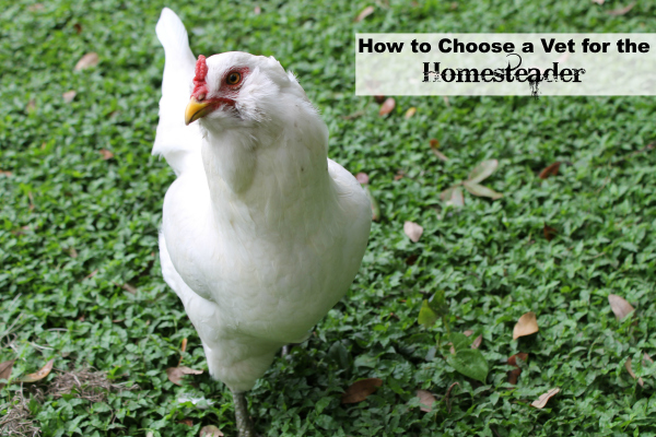 Coose a Vet for the Homesteader