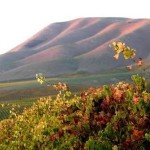 The Bucket List: Cambria #PlaceLikeNoOther #CambriaWines