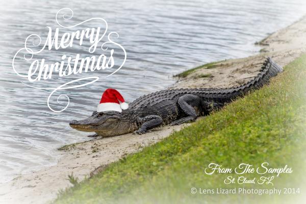 Merry Christmas Gator