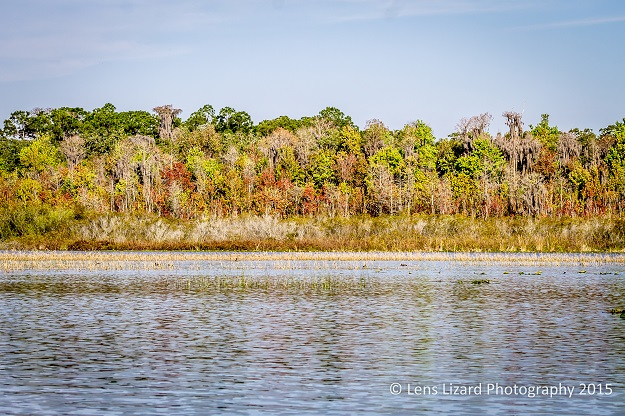 alligator lake-1-2