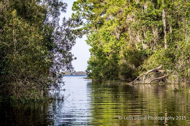 alligator lake-1-7