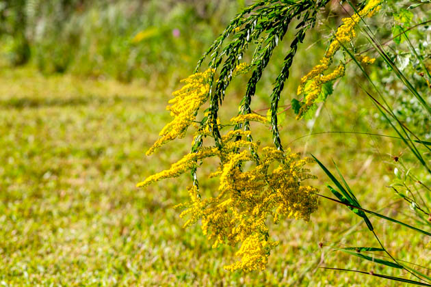 Fall Florida Flowers (4 of 8)