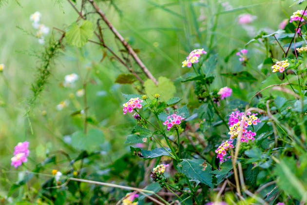 Fall Florida Flowers (8 of 8)