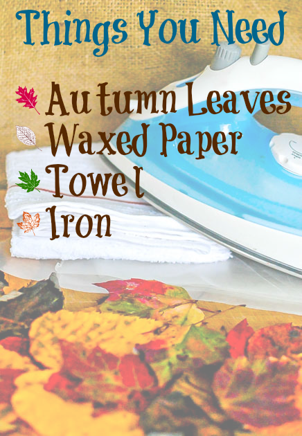 How to make pressed leaves #FallFun31 The Tools