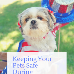 Fourth of July: Keeping Your Pets Safe During Fireworks