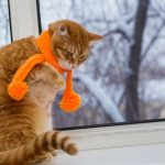 Cold Weather Pet Tips From Your Friends at Petcurean