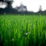 Top Lawn Care Tips For Every Season